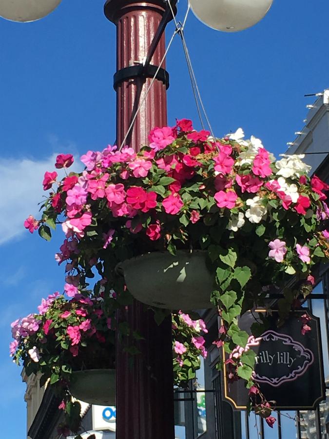 ビクトリアの花かご